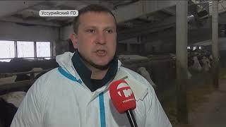 Четвертый случай заболевания животных ящуром зафиксирован в Приморье