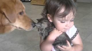 Сама нежность, ребенок обнимает котенка, ммм