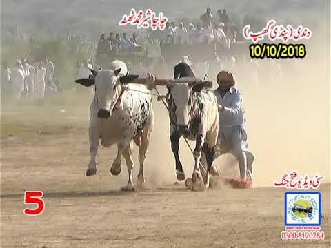 Bul Race In Pakistan Sunny Video Fateh Jang 10 10 2018 ..NO5