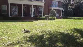 Trained Dogs For Sale Delivery To Jacksonville Fl