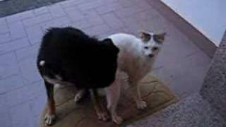 Repeat youtube video Dog & Cat in Love