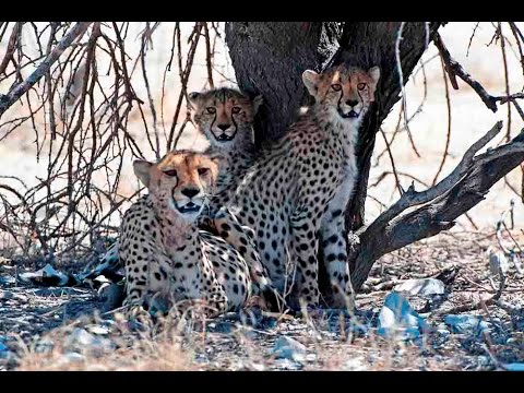 Animals in Africa: Wildlife of Namibia