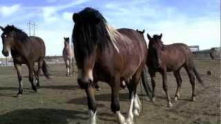 F.O.A.L. And ROTH Adoptable BLM Mustangs 2012: 1 & 2