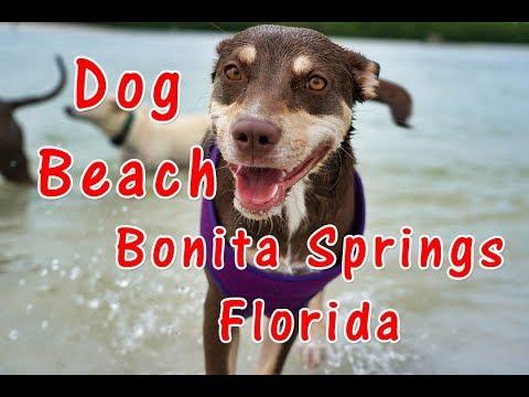 Dog Beach, Bonita Springs, Florida