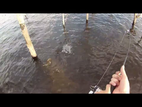Carp Fishing Fun Wyangala Dam N.s.w