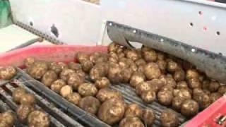 Potato harvest TOP-1 in Japan.wmv