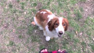 Off Leash Dog Training Come And Heel | Follow The Leader Dog Training And Rehabilitation Llc