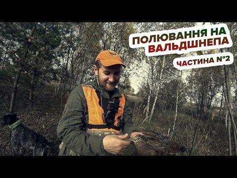 Полювання на вальдшнепа (слуква) Частина №2 / Охота на вальдшнепа