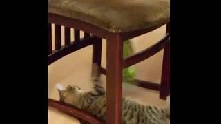 Кошка бьет лапой кукурузу из автомата с игрушками