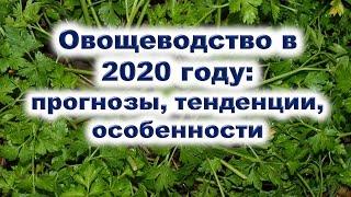 Овощеводство в 2020 году: прогнозы, тенденции, особенности. Какие овощи и когда надо садить?