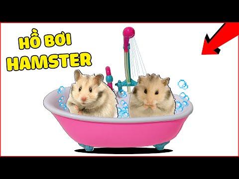 CẬN CẢNH HAMSTER TẮM SIÊU DỄ THƯƠNG | HOW TO BATHE A HAMSTER! | Chuột Hamster Của Mều Channel
