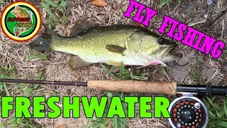 Fly Fishing In South Florida Canals For Largemouth Bass, Peacock Bass, and Cichlids!