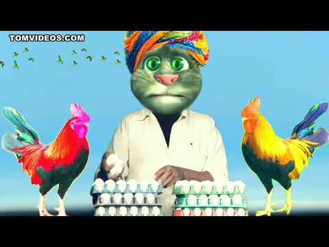 Cat best murga song best cat😍😍😍😍