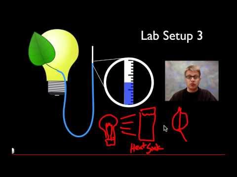 AP Biology Lab 9: Transpiration