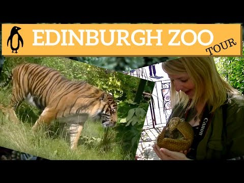 A tour of Edinburgh Zoo Scotland | Edinburgh tours