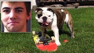 Suspect Arrested in Disappearance of Gus the Skateboarding Bulldog thumbnail