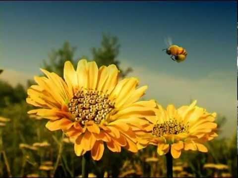 youtube filmek - Csodabogarak - Hétalvó méhecske (1.évad 7.rész)