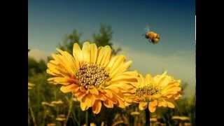 Csodabogarak - Hétalvó méhecske (1.évad 7.rész)