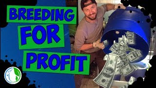 Breeding Fish For Profit - Grow Out Tubs Anywhere in the 🌎