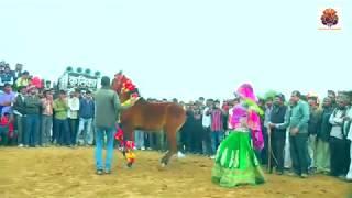 राजस्थान मीठी बोली कोयलड़ी मोरिया मोरया Rajasthan I sekhawAti