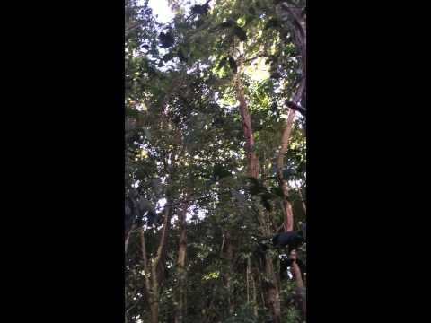 Cloud forest wind. Monteverde, Costa Rica