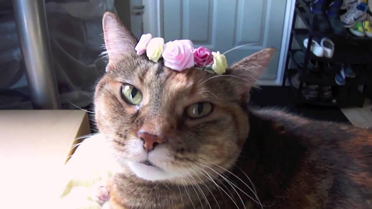Sleepy Kitty In Flower Crown Youtube