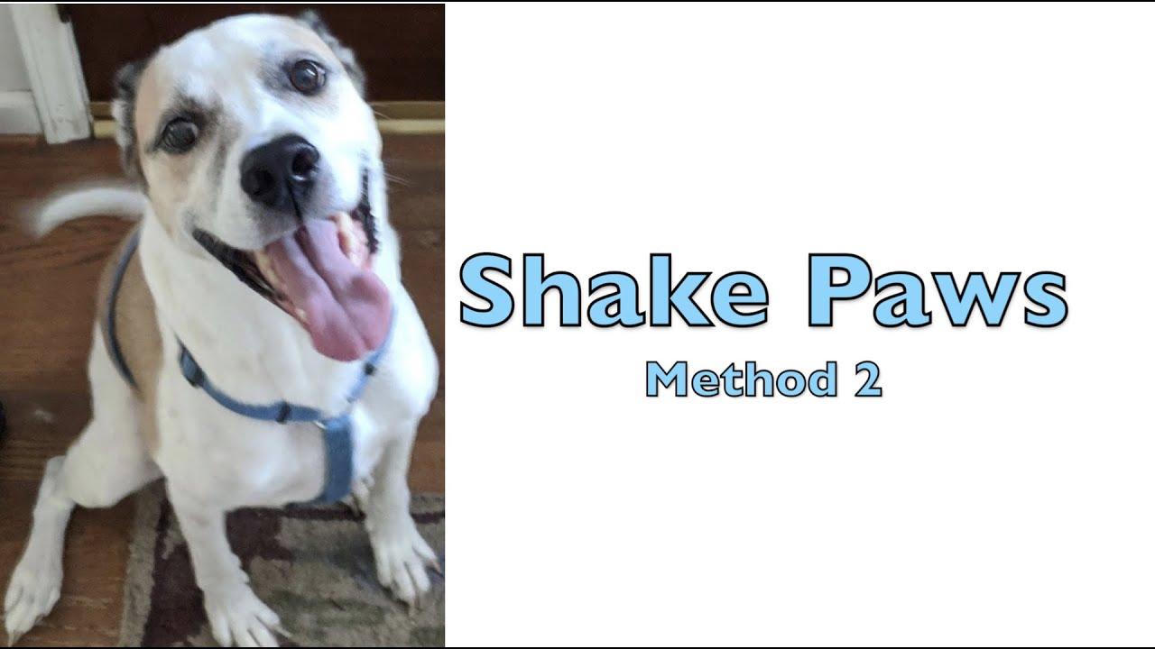 Shake Paws - Method 2