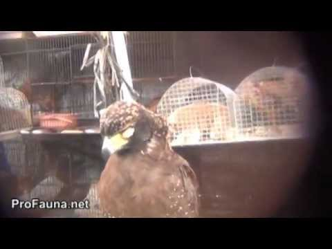 Trade of Primate In Palembang, South Sumatera