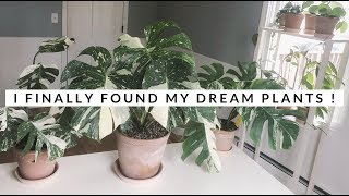 Finally purchased my dream houseplants! 🥰 | rare plants!