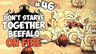Beefalo On Fire - Don't Starve Together Gameplay - Part 46