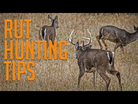 5 Tips For Hunting The Rut!