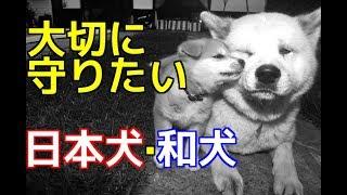 チャンネル登録はこちらからも可能です☆→http://ur0.pw/Gf0q 今回は、日...