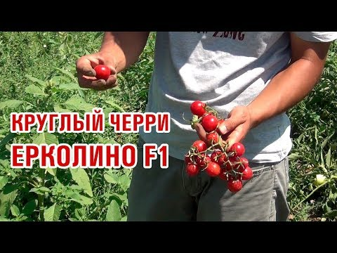 Круглый томат черри Ерколино F1