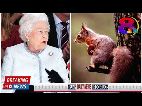 Queen LOCKED IN BATTLE over plans to improve Balmoral estate amid RED squirrel CONTROVERSY