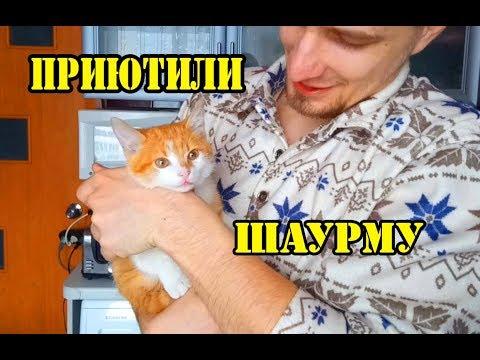 Приютили котенка. Ищем вкусный рецепт шаурмы.