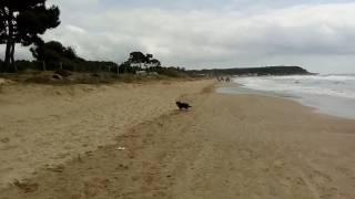El Perry ARGOS en Tarragona Camping las Palmeras Abril/Mayo 2017 II