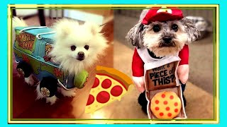 Cute Dogs in Funny Costumes | cute & Funny moments compilation |
