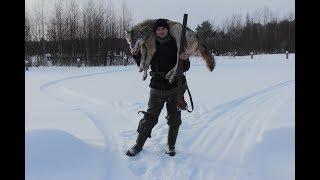 Охота на волка в зимний период или долгожданная месть