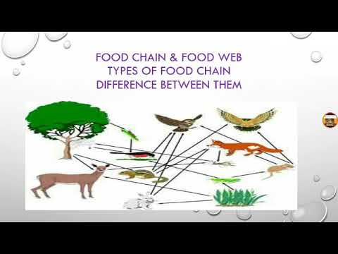 Food chain and food Web with easy explain ( in hindi)