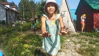 Видео блог по даче 2