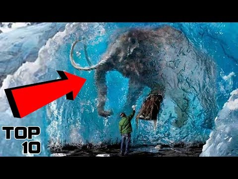 Top 10 Animals Frozen In Time