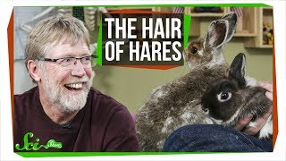 Hare Hair & Fuzzy Bunnies | SciShow Talk Show
