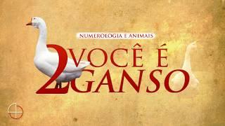GANSOS E O NÚMERO 2 (NUMEROLOGIA ANIMAL)