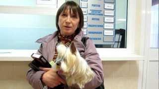 Бесплатная вакцинация собак на Школьной 32