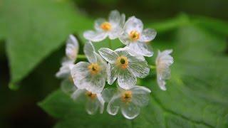 Végétaux étranges : La Fleur Squelette