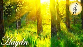 Classical Music for Studying, Concentration, Relaxation 🎼 Haydn Study Piano Music Instrumental