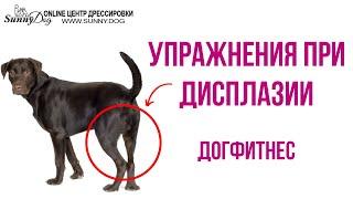 Упражнения для собак при дисплазии. Как правильно заниматься?