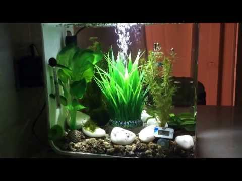 Self Cleaning Aquariums Best Rated