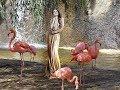 Розовый Фламинго mp3