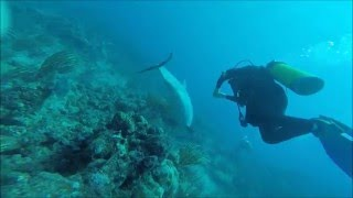 Amazing dolphin with Sunchaser Scuba